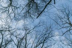 Het silhouet van de boomtak royalty-vrije stock afbeelding