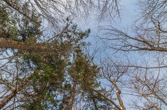 Het silhouet van de boomtak royalty-vrije stock foto
