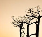 Het silhouet van de boomtak Stock Foto's