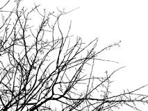 Het silhouet van de boomtak Royalty-vrije Stock Foto's