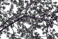 het silhouet van de boomtakken tegen de hemel Royalty-vrije Stock Afbeeldingen