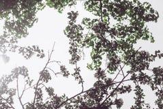het silhouet van de boomtakken tegen de hemel Stock Afbeelding
