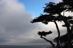 Het silhouet van de cipresboom royalty-vrije stock fotografie
