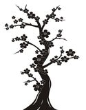 Het silhouet van de de bloesemboom van de kers Stock Afbeelding