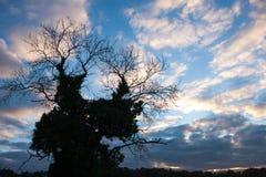 Het silhouet van de de winterboom royalty-vrije stock foto