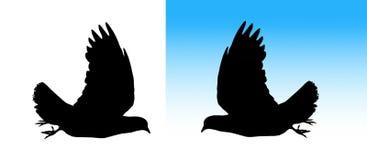 Het silhouet van de duif Stock Foto