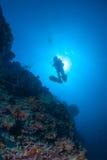 Het silhouet van de duiker bovenop een muur Royalty-vrije Stock Afbeeldingen