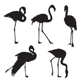 Het silhouet van de flamingo Royalty-vrije Stock Fotografie