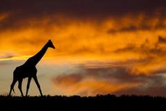 Het silhouet van de giraf stock afbeeldingen
