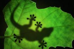 Het silhouet van de hagedis in het blad Stock Foto