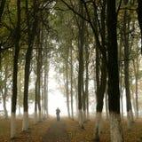 Het silhouet van de herfst Royalty-vrije Stock Foto's