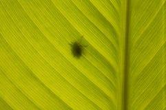 Het silhouet van de insectenschaduw op groen blad Stock Afbeelding