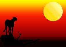 Het silhouet van de jachtluipaard in zonsondergang Royalty-vrije Stock Afbeelding