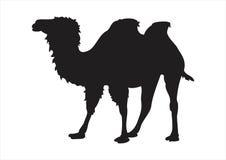 Het silhouet van de kameel Royalty-vrije Stock Foto's