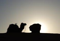 Het Silhouet van de kameel Stock Foto's