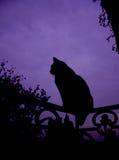 Het Silhouet van de kat Stock Foto's