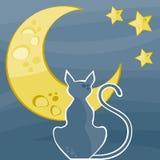 Het silhouet van de kat Stock Fotografie