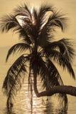 Het silhouet van de kokosnotenpalm bij zonsondergang Koh Phangan-eiland, Thailand Stock Foto