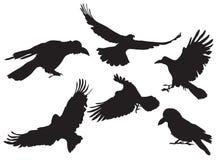 Het silhouet van de kraai Royalty-vrije Stock Afbeelding