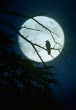 Het silhouet van de kraai door maanlicht Royalty-vrije Stock Foto's