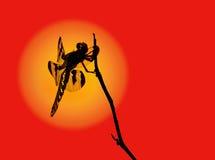Het silhouet van de libel Royalty-vrije Stock Afbeelding