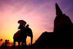 Het silhouet van de olifant Stock Afbeeldingen