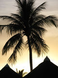 Het Silhouet van de palm Stock Foto