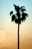 Het silhouet van de palm royalty-vrije stock foto's