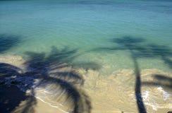 Het silhouet van de palm Stock Afbeeldingen