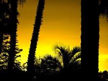 Het Silhouet van de palm Royalty-vrije Stock Foto