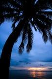 Het silhouet van de palm Stock Foto's
