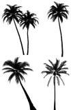 Het silhouet van de palm dat op wit wordt geplaatst Stock Foto's
