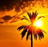 Het silhouet van de palm over zonsondergang Stock Fotografie