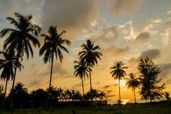 Het silhouet van de palmenzonsondergang bij tropische toevlucht stock fotografie