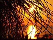 Het silhouet van de palmtak bij zonsondergang Stock Foto