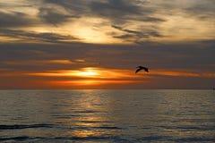 Het silhouet van de pelikaan bij zonsondergang Stock Foto
