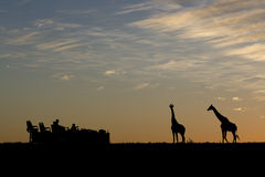 Het silhouet van de safari royalty-vrije stock foto's