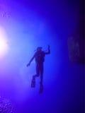 Het silhouet van de scuba-duiker Stock Fotografie