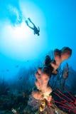 Het silhouet van de scuba-duiker Stock Foto