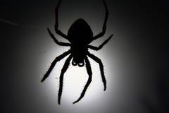Het Silhouet van de spin Stock Afbeeldingen