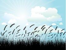 Het silhouet van de tarwe Stock Afbeeldingen