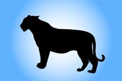 Het silhouet van de tijger Stock Foto's
