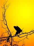 Vlindersilhouet stock foto