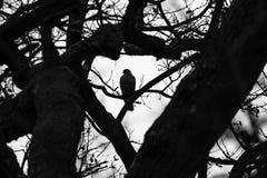Het silhouet van de vogel Stock Afbeelding