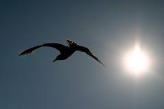 Het Silhouet van de vogel stock foto's