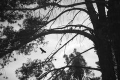 Het silhouet van de vogel en van de boom stock afbeelding