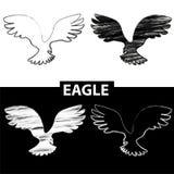 Het silhouet van de vogel Zwart-witte tekeningsadelaar Stock Afbeeldingen