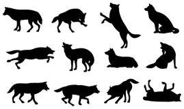 Het silhouet van de wolf Stock Afbeelding