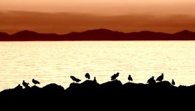 Het silhouet van de zeemeeuw Royalty-vrije Stock Foto's