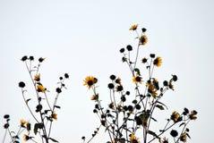 Het Silhouet van de zonnebloem Royalty-vrije Stock Afbeeldingen